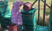 Visita producción de moras