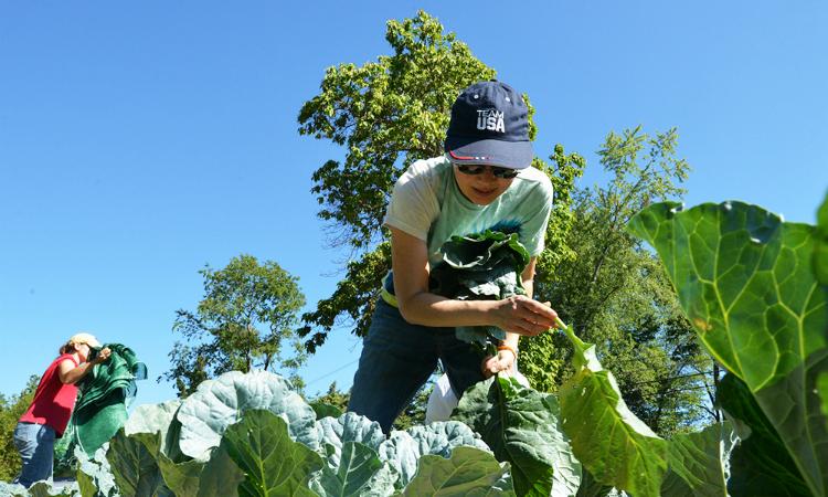Podcast: Promoción de pequeños agricultores y campesinos