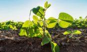 Podcast: Nuevas técnicas de mejora de cultivo y marco regulatorio