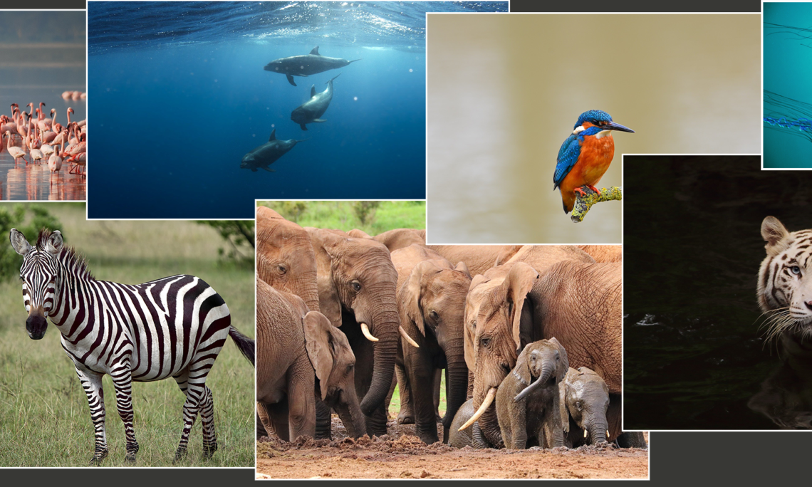 Collage of wild animals
