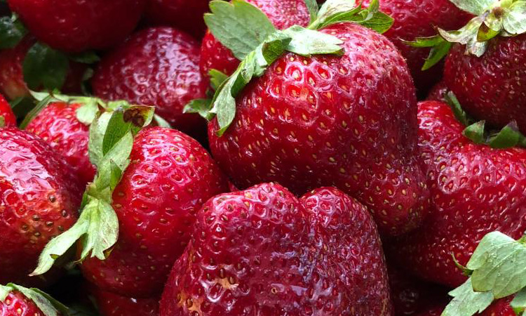 California Strawberries at Farmers Market Photograph by