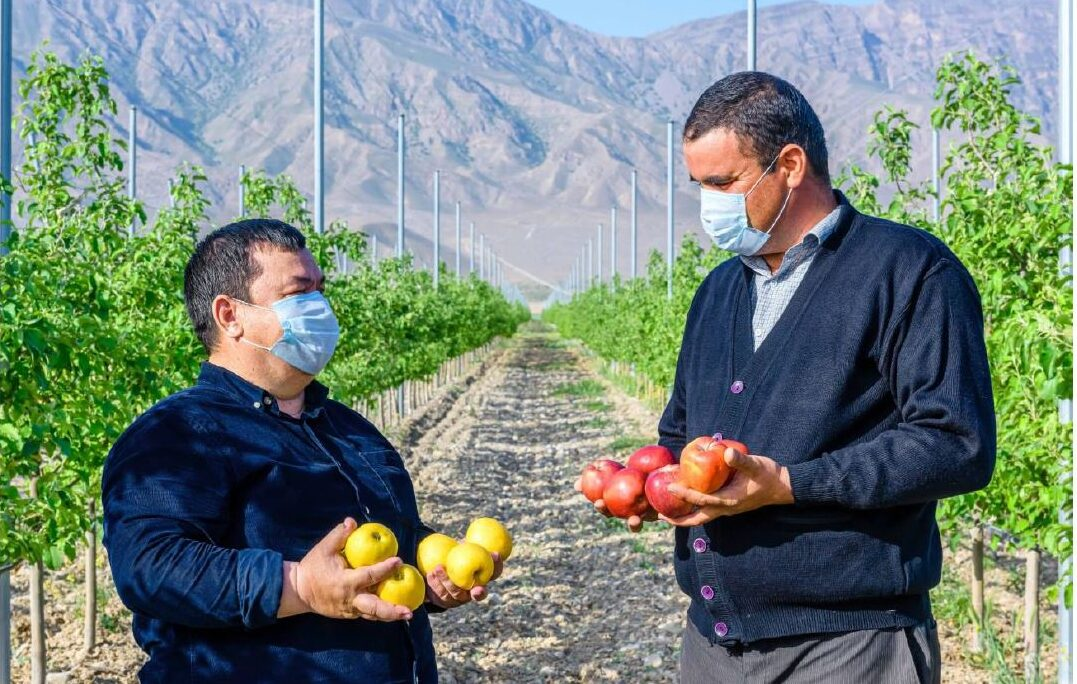 Nurturing Apple Orchards in Turkmenistan: USAID's Consulting Services Lead to Double the Yields for Apple Growers