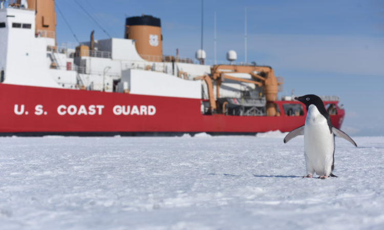 A curious Adelie penguin stands near the Coast Guard Cutter Polar Star on McMurdo Sound, Antarctica, Jan. 7, 2016. During their visit to Antarctica for Deep Freeze 2016, the U.S. military's logistical support to the National Science Foundation-managed U.S. Antarctic Program, the Polar Star crew encounters a variety of Antarctic marine life, including penguins, whales and seals. U.S. Coast Guard photo by Petty Officer 2nd Class Grant DeVuyst.