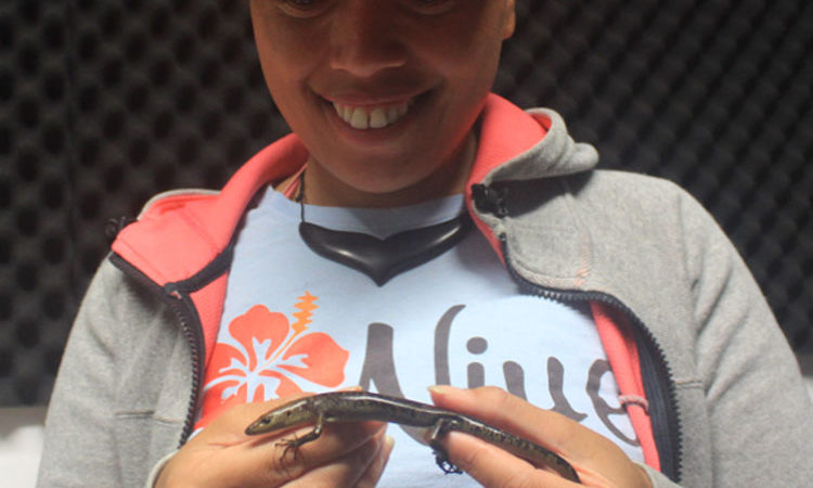 Ridge to Reef Technical Officer, Fiafia Rex holding one of the captured skinks. Photo credit:Ridge to Reef Project.