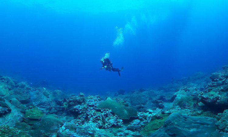 A diver hovering above the seabed