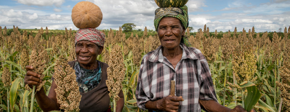 Fostering Agribusiness for Resilient Markets
