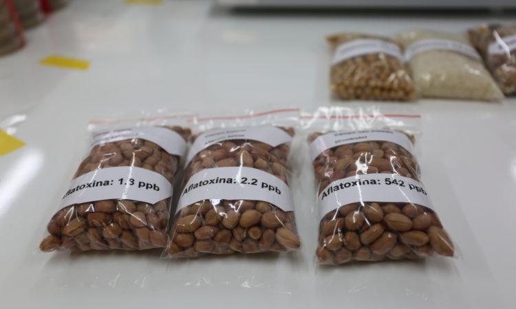 Moçambique e o Estados Unidos Lançam Estudo de Aflatoxina e Desnutrição Crónica em Nampula
