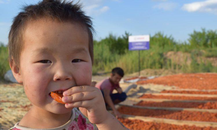 Бизнес форум для производителей абрикосов