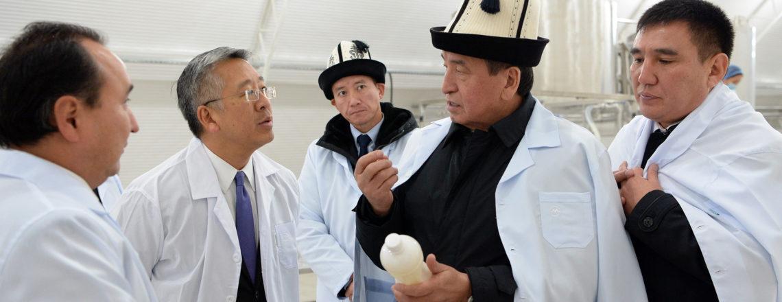 Президент Жээнбеков и Посол Лу открывают молокоперерабатывающее предприятие в городе Ош