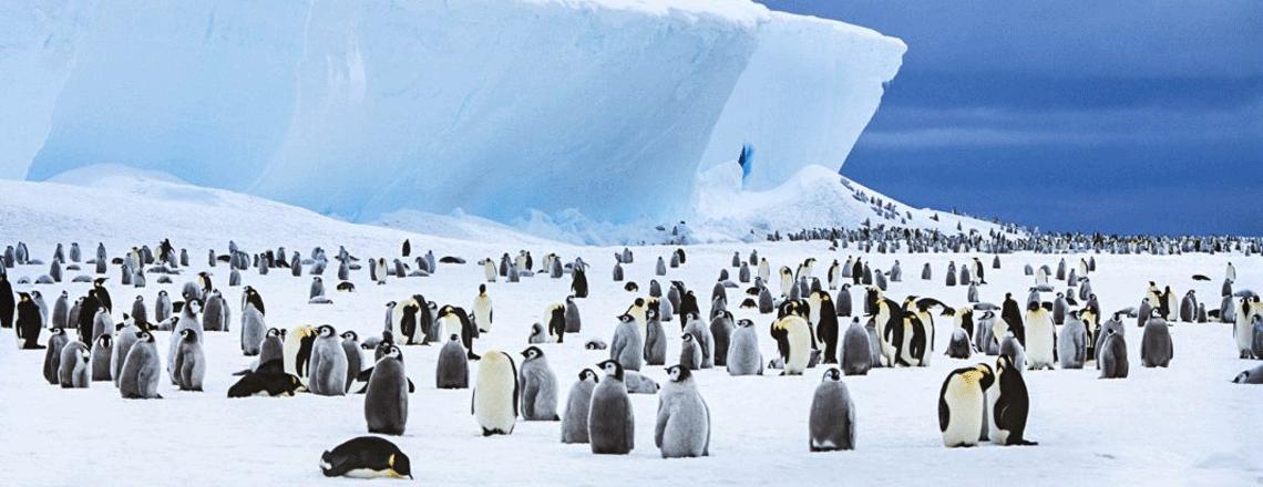 Le plus grand sanctuaire marin du monde protégera la faune de l'Antarctique