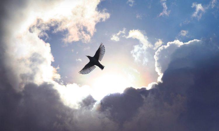 Vogel vor beeindruckendem Wolkengebilde