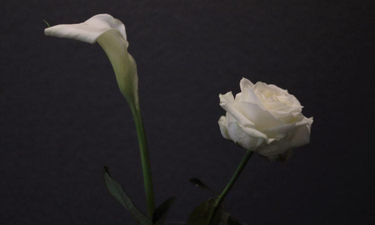 Weiße Blumen auf schwarzem Hintergrund