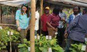 University of Montana masters students, Destina Samani and Sophie DeMartine, discuss the development of the native tree seedlings destined to reforest the Bossou-Nimba corridor, with staff from IREB and AUDER.