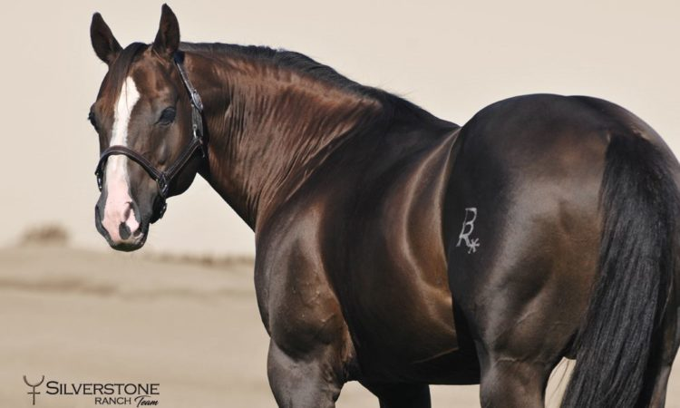 Legendary American Quarter Horse Foals with Top U.S. Genes Expected in the Czech Republic