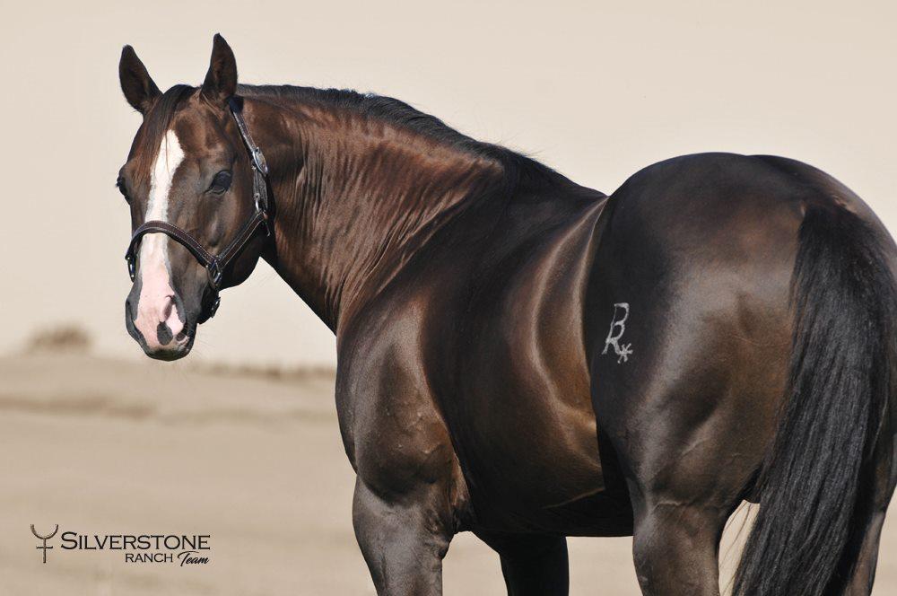 Legendary American Quarter Horse Foals With Top U S Genes