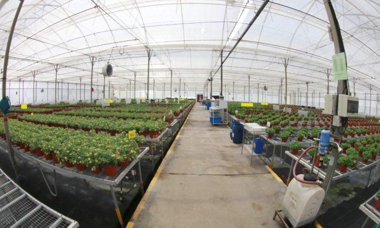 Innovaplant y Ticoplant, productoras de plantas ornamentales, forma parte del plan piloto que desarrolla el gobierno estadounidense, por medio de su oficina APHIS (Animal and Plant Health Inspection Service).