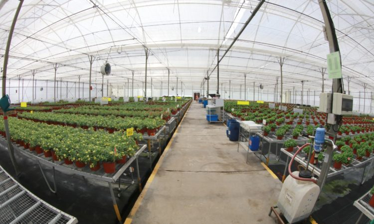 Innovaplant and Ticoplant are the Costa Rican ornamental plants producers that are part of the pilot plan the U.S. government is developing through APHIS.