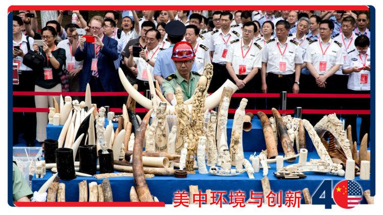 遏制野生动物贩运 (AP)