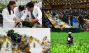 Fotos de proyectos de cooperación técnica de IAEA