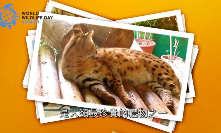 AIT高雄分處處長歐雨修慶祝世界野生動植物日! [影片]