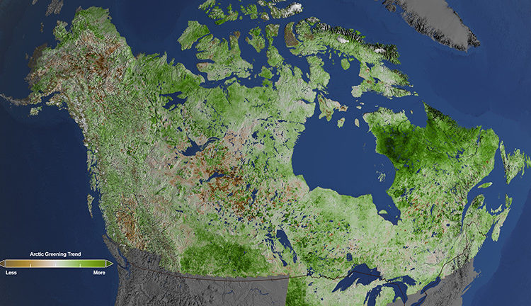 Using 29 years of data from Landsat satellites, researchers at NASA have found extensive greening in the vegetation across Alaska and Canada. Rapidly increasing temperatures in the Arctic have led to longer growing seasons and changing soils for the plants. Scientists have observed grassy tundras changing to scrublands, and shrub growing bigger and denser. From 1984–2012, extensive greening has occurred in the tundra of Western Alaska, the northern coast of Canada, and the tundra of Quebec and Labrador. Credit: NASA's Goddard Space Flight Center/Cindy Starr.