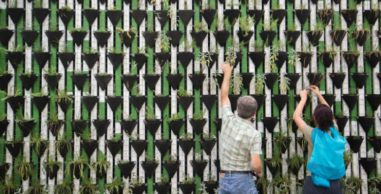 People planting on wall