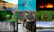 environment factsheet