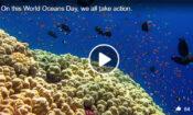 oceansday