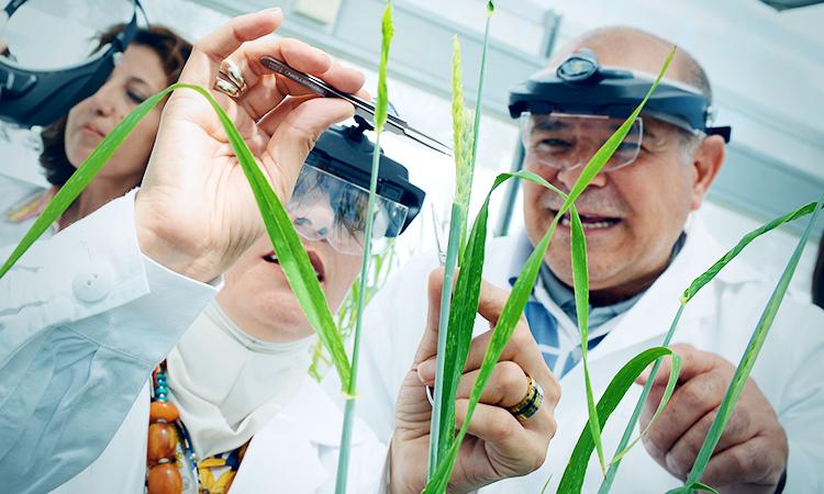 IAEA training on plant mutation breeding technology in Seibersdorf, Austria. (IAEA/file)