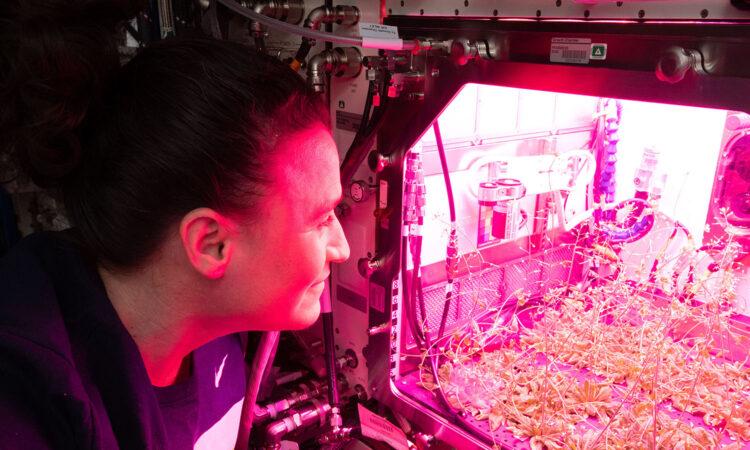 Plants in Space. (NASA)