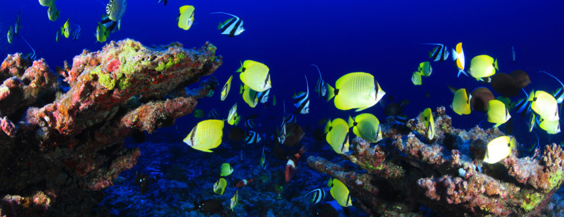 U.S. Announces $800k Support to the IAEA to Promote Sustainable Blue Economy