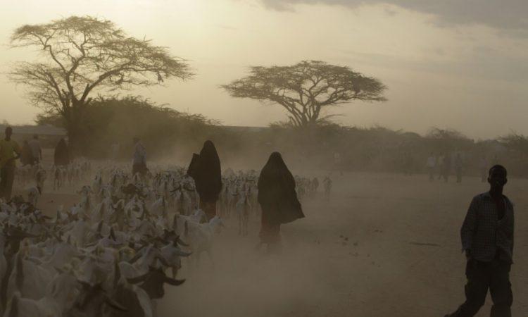 Le changement climatique va probablement se traduire par des périodes de sécheresse plus fréquentes et plus intenses, comme au Kenya sur la photo. (© AP Images)
