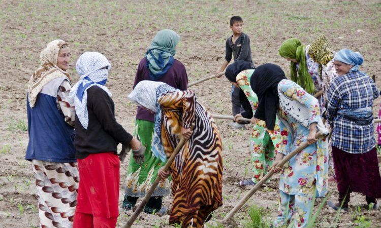 Women in colorful dress and headscarves hoeing land in Tajikistan