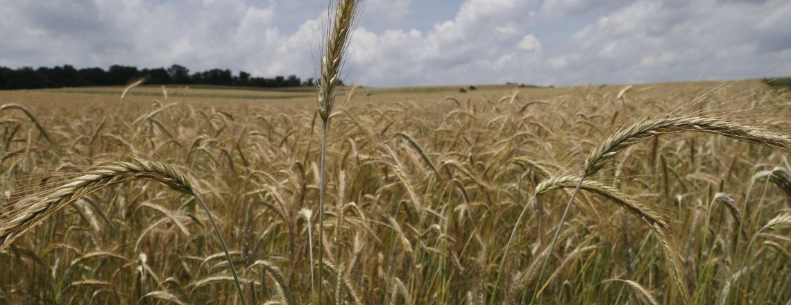 U.S. Farmers Feed the World