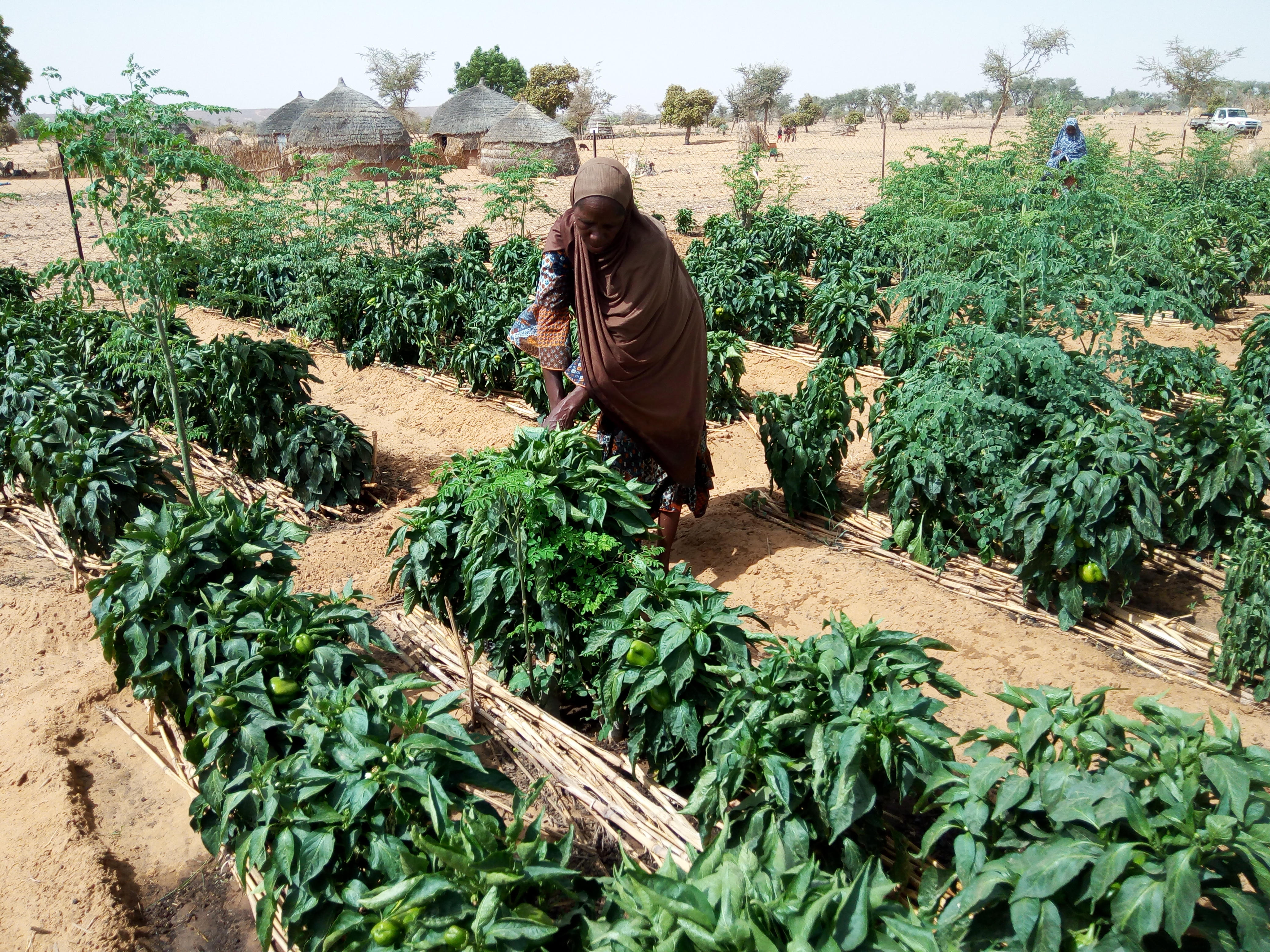 MCA at Three: Building Roads, Improving Irrigation, and Strengthening Agriculture in Niger