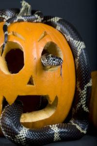 Halloween i Smithsonian's National Zoo (Mehgan Murphy/State Dept.)